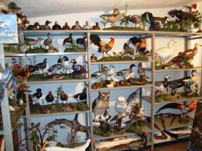 Panoramica sculture di Stamperia Baldan Duck Decoys